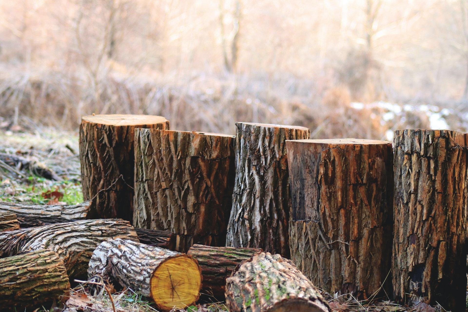 wood hardness